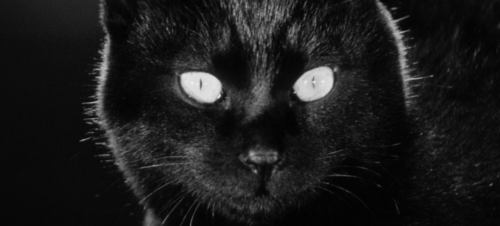 close-up of black cat's face from the film Kuroneko
