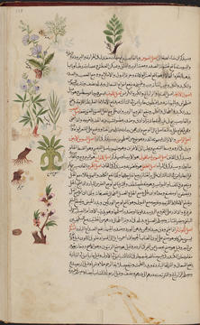 Arabic And Persian Medical Books And Manuscripts Yale