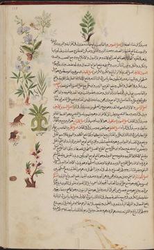 A page image from Kitāb Kanz al-ḥukamā' wa-maṭlab al-aṭibbā' wa-al-ʻulamā', [1612]
