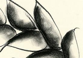 Detail of original drawing by Barbara Benish for The Song of Songs