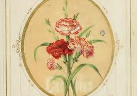 Image of a carnation from The Language of Flowers