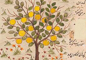 Image of an illuminated botanical manuscript
